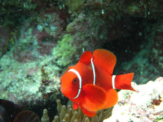 Hello Nemo!